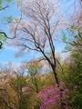 春の山2@比叡山
