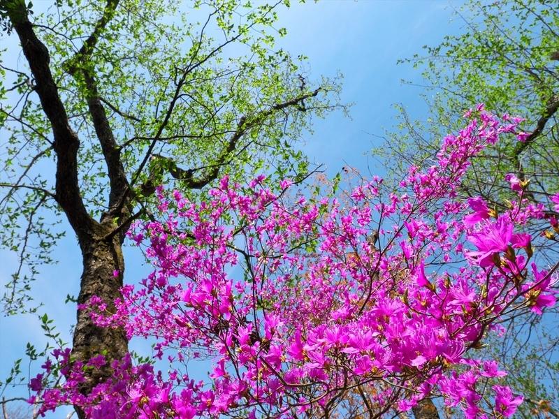 青空に咲く@比叡山
