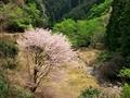 春の渓谷@比叡山