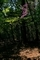 木漏れ日に咲く@鞍馬竜王岳