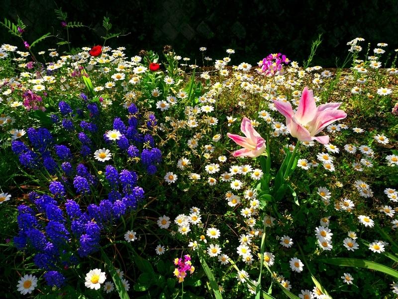 小さな花園@岩倉