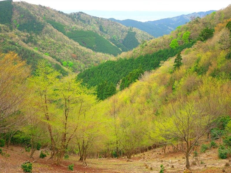 春の山@京都北山