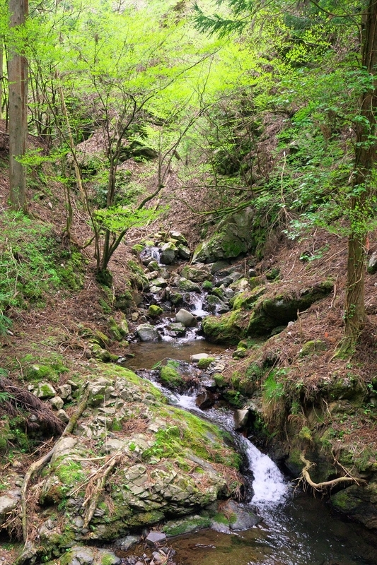 新緑の渓谷@京都北山三谷