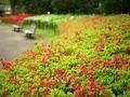 ツツジ@京都府立植物園