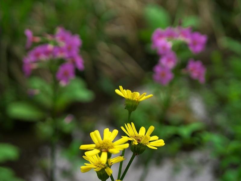 水辺に咲く@京都府立植物園