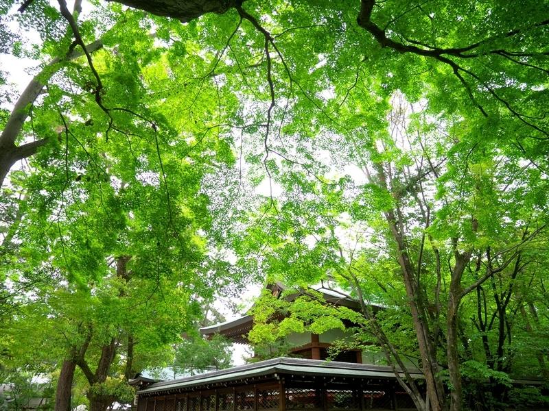 緑の境内@上御霊神社