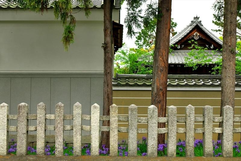 イチハツ咲く上御霊神社
