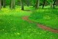 草原の小道