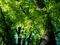 新緑の只中@京都府立植物園
