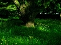 大樹の影@京都御苑