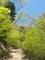 新緑の山道@京都北山