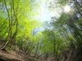 新緑の山@京都北山