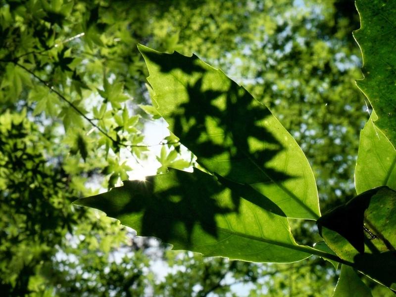 新緑の影@京都府立植物園