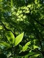 新緑の森の中@京都府立植物園