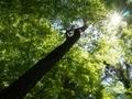 緑に染まる@京都府立植物園