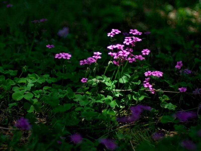木漏れ日に咲く@京都府立植物園