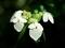白く浮かび上がる@京都府立植物園