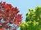 赤と緑のせめぎ合い@京都府立植物園
