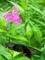 蝶と花@京都府立植物園