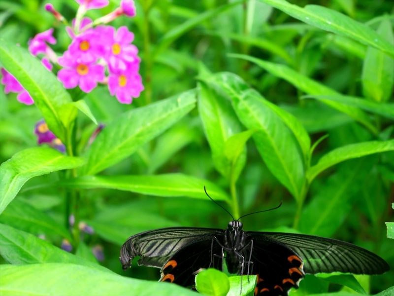 蝶と花2@京都府立植物園