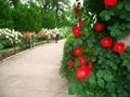 バラ園にて@京都府立植物園