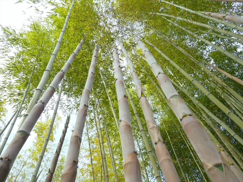 天に向かって真っ直ぐに@京都府立植物園