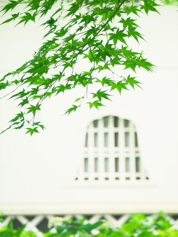 白壁に新緑@真如堂