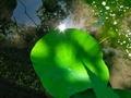 ハス池俯瞰@京都府立植物園