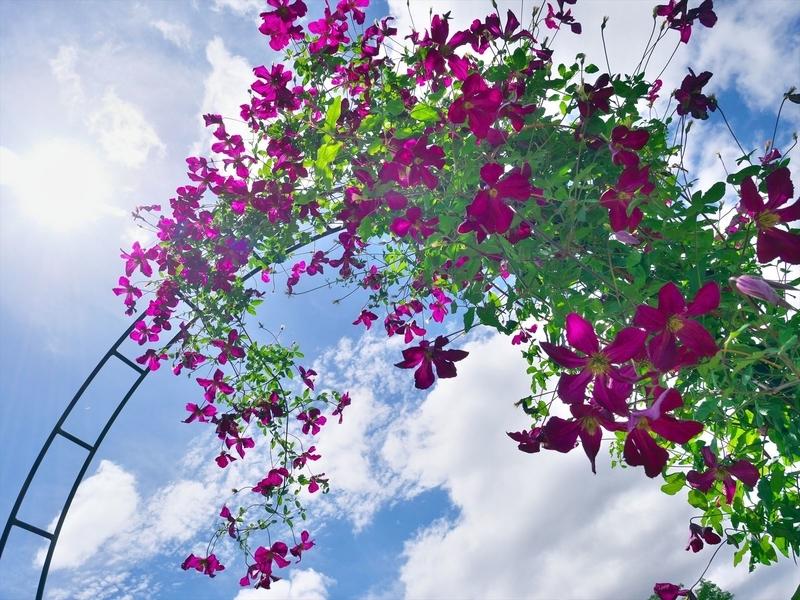 花のアーチ@京都府立植物園