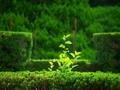 はみ出して@京都府立植物園