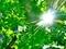 太陽は爆発だ!@京都府立植物園