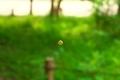 浮遊する菩提樹花@京都府立植物園