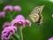 花とアゲハチョウ@京都府立植物園