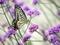 花とアゲハチョウ2@京都府立植物園