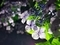 夜の紫陽花@一乗寺