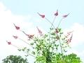 天高く赤い花@京都府立植物園