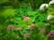 紫陽花に囲まれるハス花@京都府立植物園