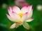 ほんのりと染まって@京都府立植物園