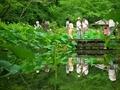 にぎわうアジサイ園@京都府立植物園