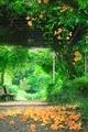 ノウゼンカズラ@京都府立植物園