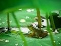 雨宿り@京都府立植物園