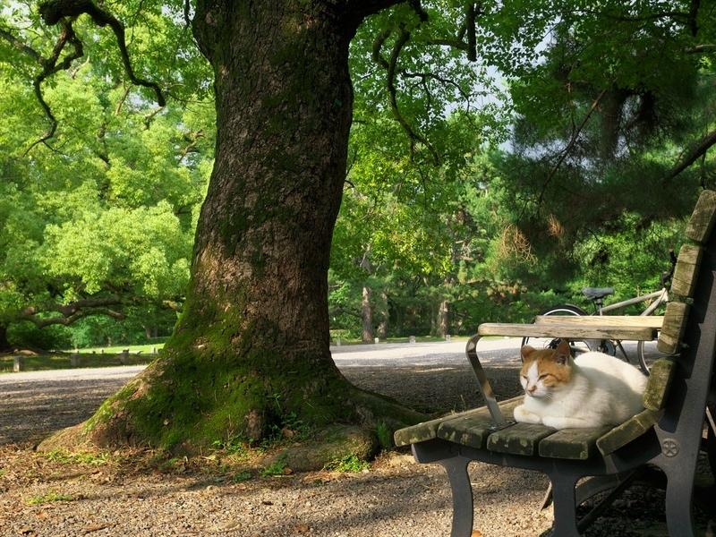 ベンチで一休み@京都御苑