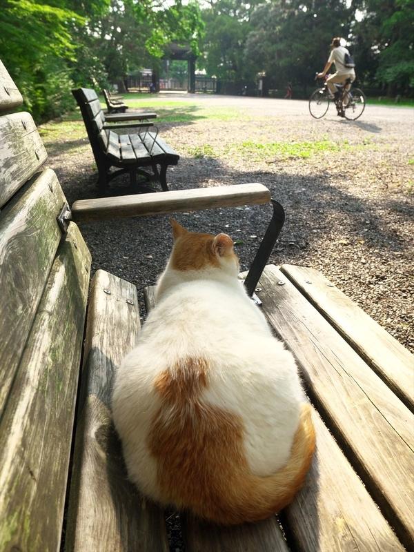 ベンチからの眺め@京都御苑