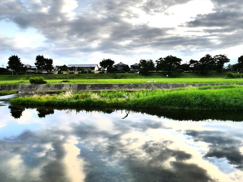 賀茂川を飛ぶサギ2
