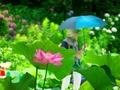 日傘@京都府立植物園