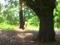 光の中へ@京都府立植物園