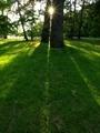 木の間の落日@京都御苑