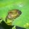 水滴に包まれて@京都府立植物園