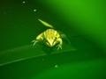 緑色に染まって@京都府立植物園