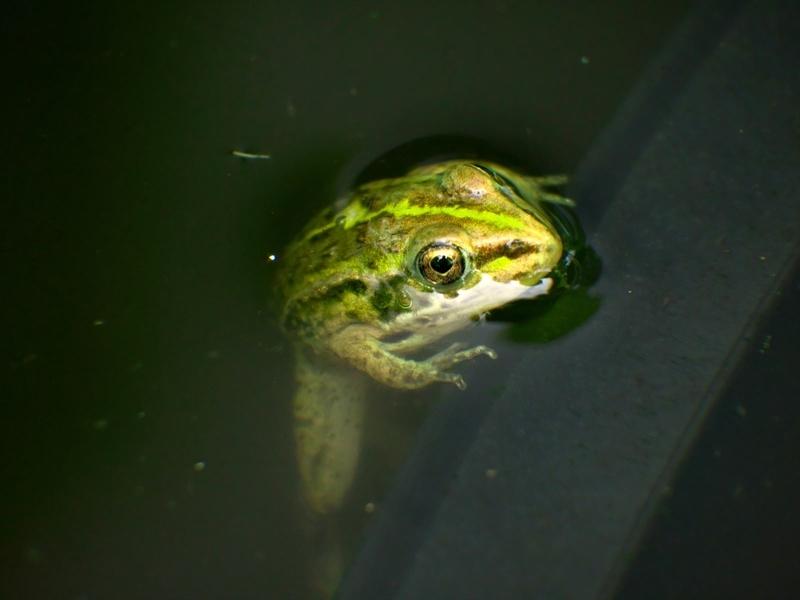そろそろ水から上がろうか@京都府立植物園